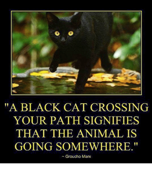 "Memes, Animal, and Black: ""A BLACK CAT CROSSING  YOUR PATH SIGNIFIES  THAT THE ANIMAL IS  GOING SOMEWHERE.""  - Groucho Marx"