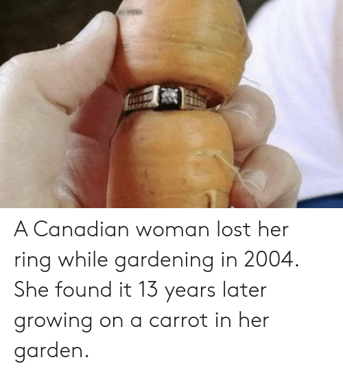 Gardening: A Canadian woman lost her ring while gardening in 2004. She found it 13 years later growing on a carrot in her garden.