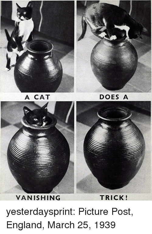 England, Tumblr, and Blog: A CAT  DOES A  VANISHING  TRICK! yesterdaysprint:  Picture Post, England, March 25, 1939