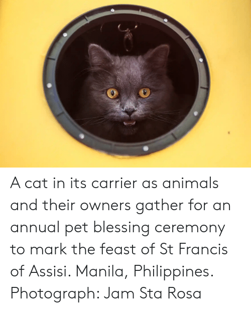 Animals, Philippines, and Francis of Assisi: A cat in its carrier as animals and their owners gather for an annual pet blessing ceremony to mark the feast of St Francis of Assisi. Manila, Philippines. Photograph: Jam Sta Rosa