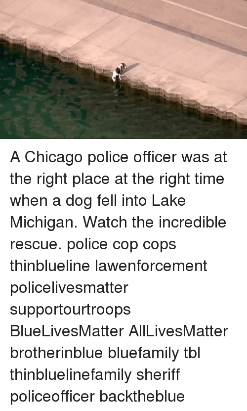 lakings: A Chicago police officer was at the right place at the right time when a dog fell into Lake Michigan. Watch the incredible rescue. police cop cops thinblueline lawenforcement policelivesmatter supportourtroops BlueLivesMatter AllLivesMatter brotherinblue bluefamily tbl thinbluelinefamily sheriff policeofficer backtheblue