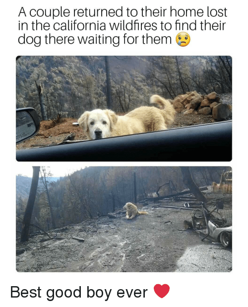 Memes, Lost, and Best: A couple returned to their home lost  in the california wildfires to find their  dog there waiting for them Best good boy ever ❤️