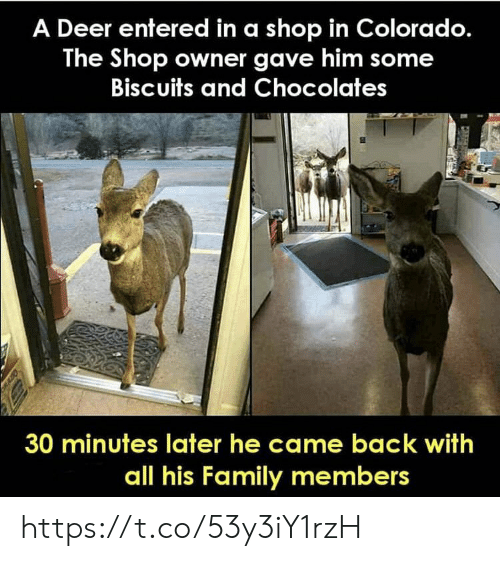 Deer, Family, and Memes: A Deer entered in a shop in Colorado.  The Shop owner gave him some  Biscuits and Chocolates  30 minutes later he came back with  all his Family members https://t.co/53y3iY1rzH