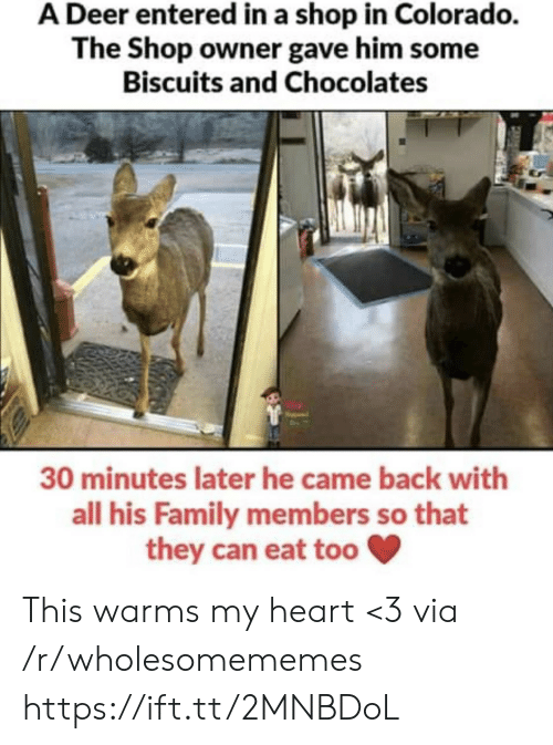 Deer, Family, and Colorado: A Deer entered in a shop in Colorado.  The Shop owner gave him some  Biscuits and Chocolates  30 minutes later he came back with  all his Family members so that  they can eat too This warms my heart <3 via /r/wholesomememes https://ift.tt/2MNBDoL