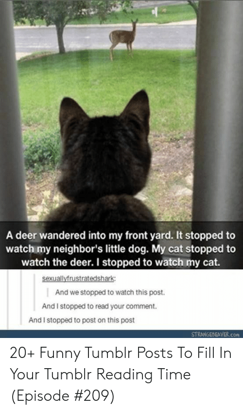 Deer, Funny, and Tumblr: A deer wandered into my front yard. It stopped to  watch my neighbor's little dog. My cat stopped to  watch the deer. I stopped to watch my cat.  sexuallyfrustratedshark  And we stopped to watch this post.  And I stopped to read your comment.  And I stopped to post on this post  STRANGEBEAVER.com 20+ Funny Tumblr Posts To Fill In Your Tumblr Reading Time (Episode #209)