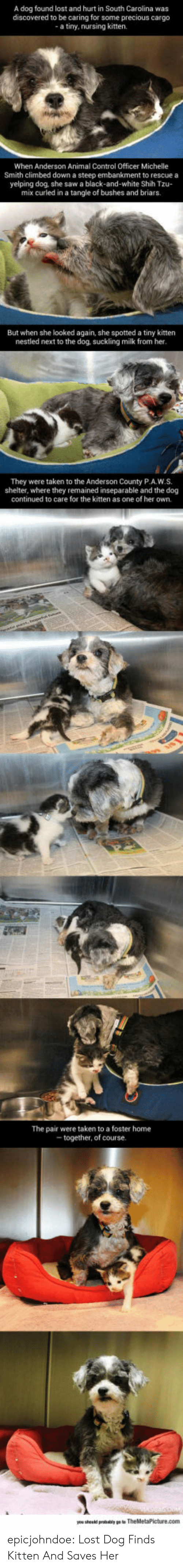 Spotted: A dog found lost and hurt in South Carolina was  discovered to be caring for some precious cargo  a tiny, nursing kitten.  When Anderson Animal Control Officer Michelle  Smith climbed down a steep embankment to rescue a  yelping dog, she saw a black-and-white Shih Tzu-  mix curled in a tangle of bushes and briars.  But when she looked again, she spotted a tiny kitten  nestled next to the dog, suckling milk from her  They were taken to the Anderson County P.A.W.S.  shelter, where they remained inseparable and the dog  continued to care for the kitten as one of her own.  The pair were taken to a foster home  together, of course epicjohndoe:  Lost Dog Finds Kitten And Saves Her