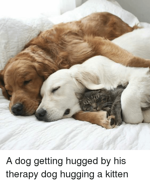A Dog Getting Hugged By His Therapy Dog Hugging A Kitten