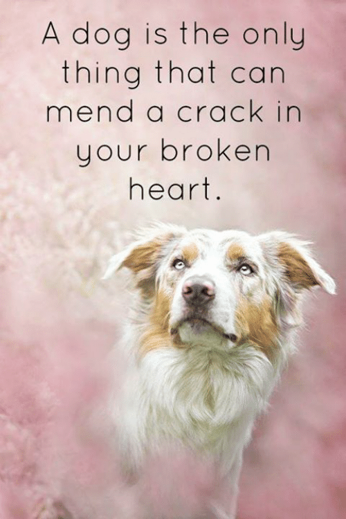 Memes, Heart, and 🤖: A dog is the only  thing that can  mend a crack in  your broken  heart.