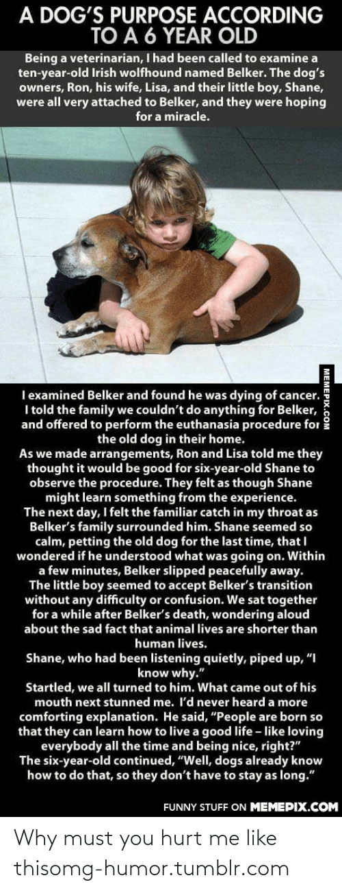"""Arrangements: A DOG'S PURPOSE ACCORDING  TO A 6 YEAR OLD  Being a veterinarian, I had been called to examine a  ten-year-old Irish wolfhound named Belker. The dog's  owners, Ron, his wife, Lisa, and their little boy, Shane,  were all very attached to Belker, and they were hoping  for a miracle.  I examined Belker and found he was dying of cancer.  I told the family we couldn't do anything for Belker,  and offered to perform the euthanasia procedure for  the old dog in their home.  As we made arrangements, Ron and Lisa told me they  thought it would be good for six-year-old Shane to  observe the procedure. They felt as though Shane  might learn something from the experience.  The next day, I felt the familiar catch in my throat as  Belker's family surrounded him. Shane seemed so  calm, petting the old dog for the last time, that I  wondered if he understood what was going on. Within  a few minutes, Belker slipped peacefully away.  The little boy seemed to accept Belker's transition  without any difficulty or confusion. We sat together  for a while after Belker's death, wondering aloud  about the sad fact that animal lives are shorter than  human lives.  Shane, who had been listening quietly, piped up, """"I  know why.""""  Startled, we all turned to him. What came out of his  mouth next stunned me. I'd never heard a more  comforting explanation. He said, """"People are born so  that they can learn how to live a good life - like loving  everybody all the time and being nice, right?""""  The six-year-old continued, """"Well, dogs already know  how to do that, so they don't have to stay as long.""""  FUNNY STUFF ON MEMEPIX.COM  MEMEPIX.COM Why must you hurt me like thisomg-humor.tumblr.com"""
