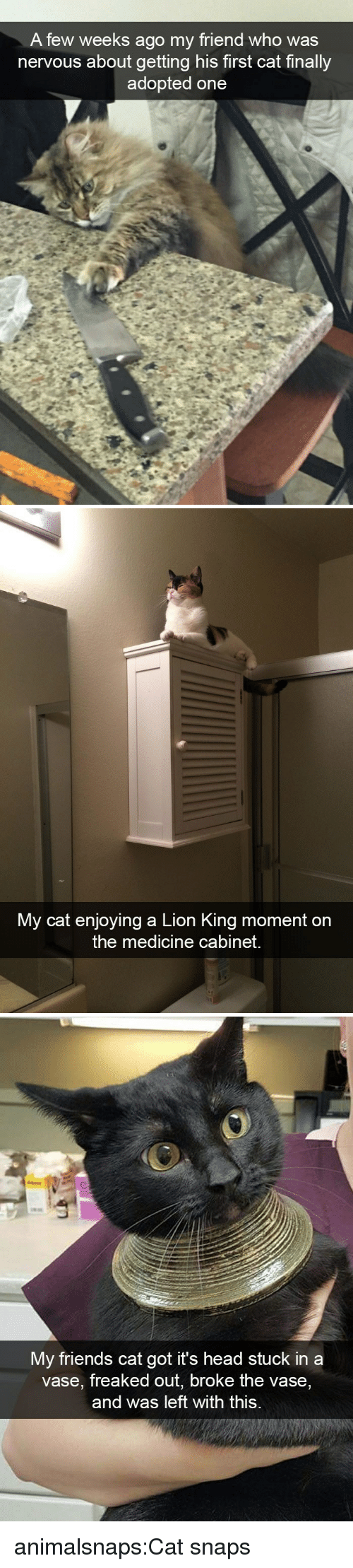Friends, Head, and Target: A few weeks ago my friend who was  nervous about getting his first cat finally  adopted one   My cat enjoying a Lion King moment on  the medicine cabinet.   My friends cat go  t it's head stuck in a  vase, freaked out, broke the vase  and was left with this. animalsnaps:Cat snaps