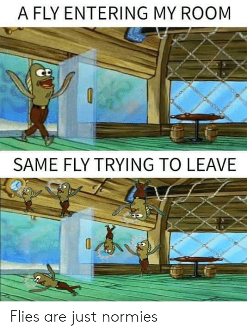 Fly, Normies, and Room: A FLY ENTERING MY ROOM  SAME FLY TRYING TO LEAVE Flies are just normies