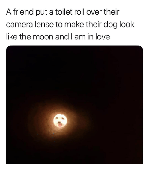 Love, Camera, and Moon: A friend put a toilet roll over their  camera lense to make their dog look  like the moon and I am in love
