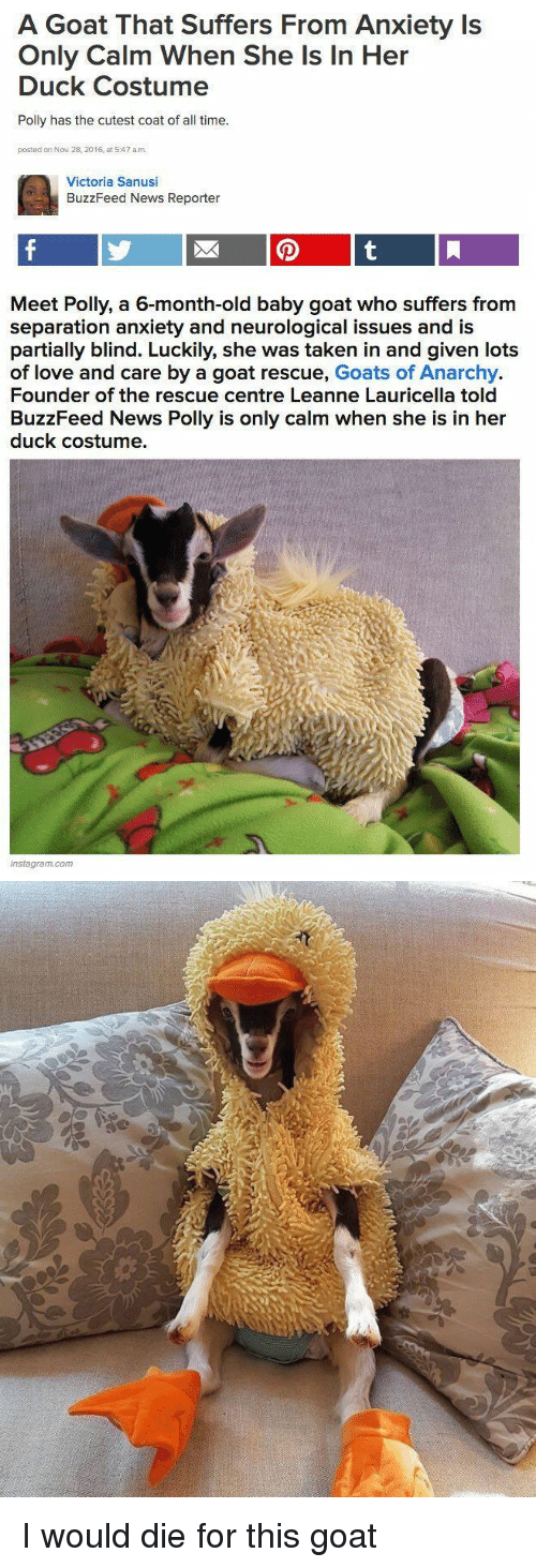 Baby Goat: A Goat That Suffers From Anxiety Is  Only Calm When She Is In Her  Duck Costume  Polly has the cutest coat of all time.  posted on Nov 28, 2016, at 5:47 a.m.  Victoria Sanusi  BuzzFeed News Reporter   Meet Polly, a 6-month-old baby goat who suffers from  separation anxiety and neurological issues and is  partially blind. Luckily, she was taken in and given lots  of love and care by a goat rescue, Goats of Anarchy.  Founder of the rescue centre Leanne Lauricella told  BuzzFeed News Polly is only calm when she is in her  duck costume.  instagram.com <p>I would die for this goat<br/></p>