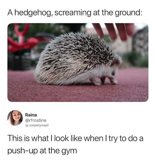 Funny, Gym, and Tumblr: A hedgehog, screaming at the ground  Raina  g: realpettymayo  This is what I look like when l try to do a  push-up at the gym
