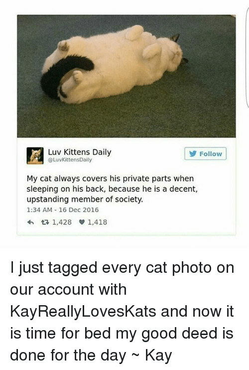Tumblr, Kitten, and Private Parts: A Luv Kittens Daily  COLuvKittensDaily  Follow  My cat always covers his private parts when  sleeping on his back, because he is a decent,  upstanding member of society.  1:34 AM 16 Dec 2016  1,428 1,418 I just tagged every cat photo on our account with KayReallyLovesKats and now it is time for bed my good deed is done for the day ~ Kay