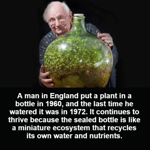 Watered: A man in England put a plant in a  bottle in 1960, and the last time he  watered it was in 1972. It continues to  thrive because the sealed bottle is like  a miniature ecosystem that recycles  its own water and nutrients.