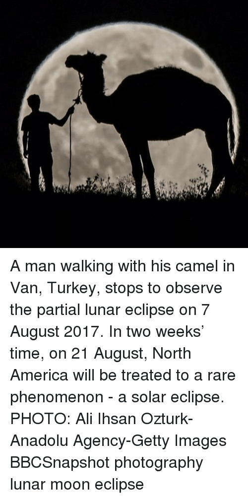 Ali, America, and Memes: A man walking with his camel in Van, Turkey, stops to observe the partial lunar eclipse on 7 August 2017. In two weeks' time, on 21 August, North America will be treated to a rare phenomenon - a solar eclipse. PHOTO: Ali Ihsan Ozturk-Anadolu Agency-Getty Images BBCSnapshot photography lunar moon eclipse