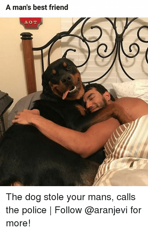 Best Friend, Memes, and Police: A man's best friend The dog stole your mans, calls the police | Follow @aranjevi for more!