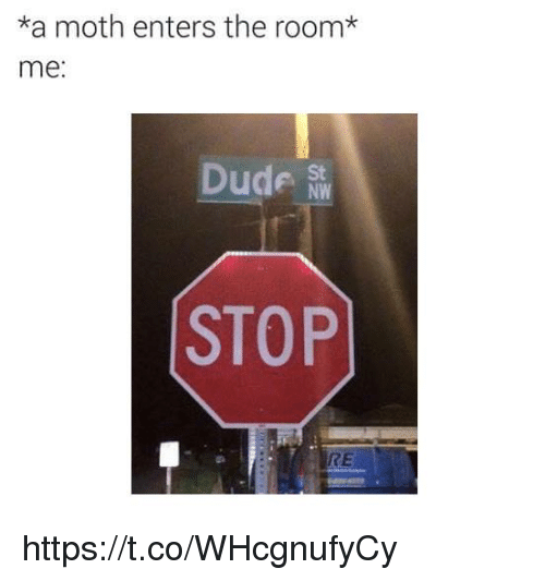 Dude, Moth, and The Room: *a moth enters the room*  me:  Dude  St  NW  STOP  RE https://t.co/WHcgnufyCy