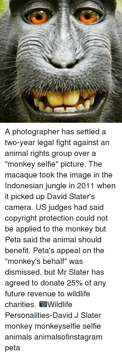 "Animals, Future, and Memes: A photographer has settled a two-year legal fight against an animal rights group over a ""monkey selfie"" picture. The macaque took the image in the Indonesian jungle in 2011 when it picked up David Slater's camera. US judges had said copyright protection could not be applied to the monkey but Peta said the animal should benefit. Peta's appeal on the ""monkey's behalf"" was dismissed, but Mr Slater has agreed to donate 25% of any future revenue to wildlife charities. 📷Wildlife Personalities-David J Slater monkey monkeyselfie selfie animals animalsofinstagram peta"