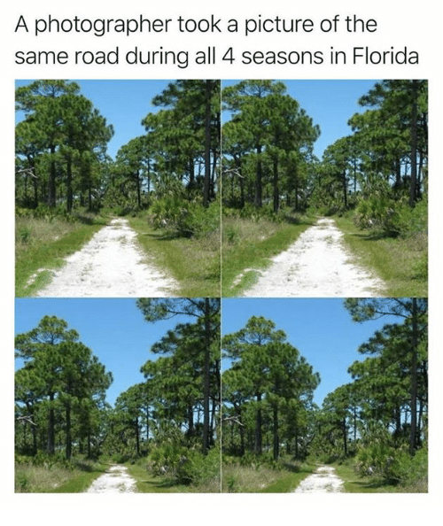 Dank, Florida, and A Picture: A photographer took a picture of the  same road during al 4 seasons in Florida