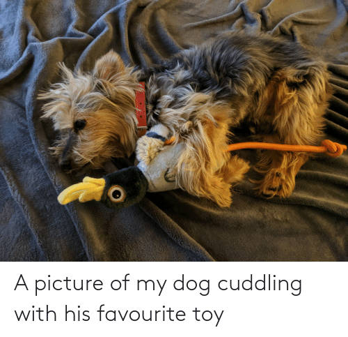 toy: A picture of my dog cuddling with his favourite toy