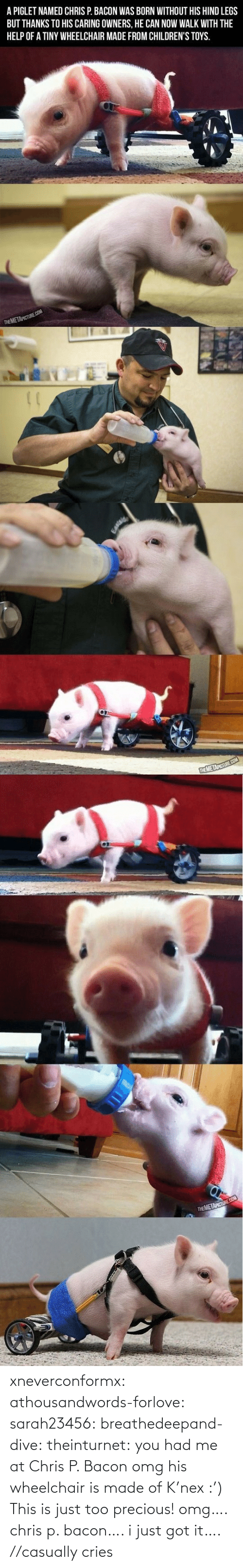Hind Legs: A PIGLET NAMED CHRIS P. BACON WAS BORN WITHOUT HIS HIND LEGS  BUT THANKS TO HIS CARING OWNERS, HE CAN NOW WALK WITH THE  HELP OF A TINY WHEELCHAIR MADE FROM CHILDREN'S TOYS.  THE METAPICTURE.COM   THEMETAPICTURE.COM  MAU   THEMETAPICTURE COM xneverconformx:  athousandwords-forlove:  sarah23456:  breathedeepand-dive:  theinturnet:  you had me at Chris P. Bacon  omg his wheelchair is made of K'nex :')  This is just too precious!  omg…. chris p. bacon…. i just got it….  //casually cries
