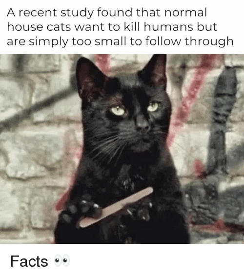 Cats, Facts, and House: A recent study found that normal  house cats want to kill humans but  are simply too small to follow through Facts 👀