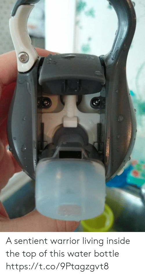 Water, Living, and Faces-In-Things: A sentient warrior living inside the top of this water bottle https://t.co/9Ptagzgvt8