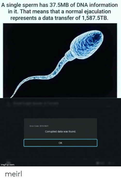 Transfer: A single sperm has 37.5MB of DNA information  in it. That means that a normal ejaculation  represents a data transfer of 1,587.5TB  Error Code: 2016-0601  Corrupted data was found.  OK  imgflip.com meirl
