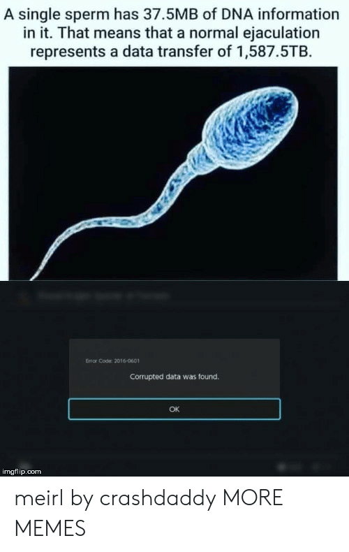 Transfer: A single sperm has 37.5MB of DNA information  in it. That means that a normal ejaculation  represents a data transfer of 1,587.5TB  Error Code 2016-0601  Corrupted data was found.  OK  imgflip.com meirl by crashdaddy MORE MEMES