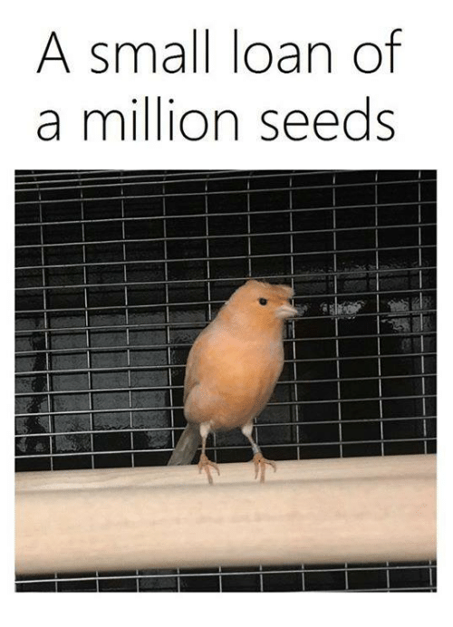 Small Loan: A small loan of  a million seeds