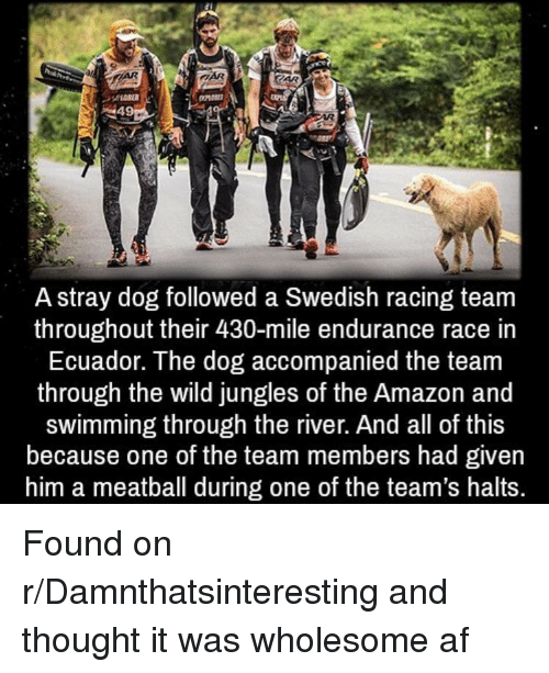 Af, Amazon, and Ecuador: A stray dog followed a Swedish racing team  throughout their 430-mile endurance race in  Ecuador. The dog accompanied the team  through the wild jungles of the Amazon and  swimming through the river. And all of this  because one of the team members had given  him a meatball during one of the team's halts. Found on r/Damnthatsinteresting and thought it was wholesome af