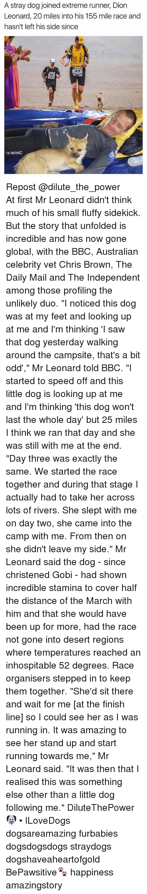 "Chris Brown, Finish Line, and Memes: A stray dog joined extreme runner, Dion  Leonard, 20 miles into his 155 mile race and  hasn't left his side since  43  XBIONIC Repost @dilute_the_power ・・・ At first Mr Leonard didn't think much of his small fluffy sidekick. But the story that unfolded is incredible and has now gone global, with the BBC, Australian celebrity vet Chris Brown, The Daily Mail and The Independent among those profiling the unlikely duo. ""I noticed this dog was at my feet and looking up at me and I'm thinking 'I saw that dog yesterday walking around the campsite, that's a bit odd',"" Mr Leonard told BBC. ""I started to speed off and this little dog is looking up at me and I'm thinking 'this dog won't last the whole day' but 25 miles I think we ran that day and she was still with me at the end. ""Day three was exactly the same. We started the race together and during that stage I actually had to take her across lots of rivers. She slept with me on day two, she came into the camp with me. From then on she didn't leave my side."" Mr Leonard said the dog - since christened Gobi - had shown incredible stamina to cover half the distance of the March with him and that she would have been up for more, had the race not gone into desert regions where temperatures reached an inhospitable 52 degrees. Race organisers stepped in to keep them together. ""She'd sit there and wait for me [at the finish line] so I could see her as I was running in. It was amazing to see her stand up and start running towards me,"" Mr Leonard said. ""It was then that I realised this was something else other than a little dog following me."" DiluteThePower 🐶 • ILoveDogs dogsareamazing furbabies dogsdogsdogs straydogs dogshaveaheartofgold BePawsitive🐾 happiness amazingstory"