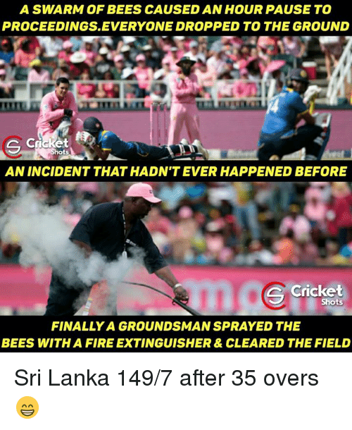 Memes, Cricket, and 🤖: A SWARM OF BEES CAUSEDAN HOUR PAUSE TO  PROCEEDINGS. EVERYONE DROPPED TO THE GROUND  S Cri  Shots  AN INCIDENT THAT HADN'T EVER HAPPENED BEFORE  Cricket  Shots  FINALLY A GROUNDSMAN SPRAYED THE  BEES WITH A FIRE EXTINGUISHER & CLEARED THE FIELD Sri Lanka 149/7 after 35 overs 😁