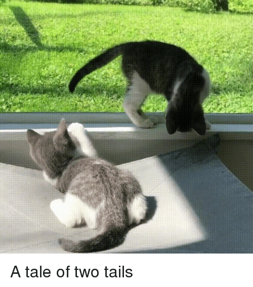 Kittens, Tails, and Tail: A tale of two tails