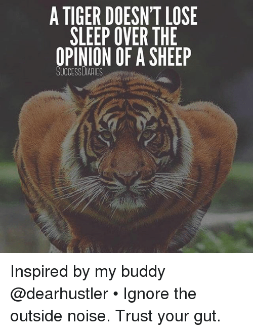 Memes, Tiger, and Sleep: A TIGER DOESN'T LOSE  SLEEP OVER THE  OPINION OF A SHEEP  SUCCESSDIARIES Inspired by my buddy @dearhustler • Ignore the outside noise. Trust your gut.