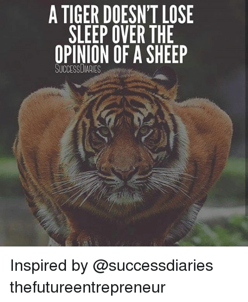Memes, Tiger, and Sleep: A TIGER DOESN'T LOSE  SLEEP OVER THE  OPINION OF A SHEEP  SUCCESSDIARIEs Inspired by @successdiaries thefutureentrepreneur