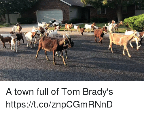 Tom Brady, Town, and Tom: A town full of Tom Brady's https://t.co/znpCGmRNnD