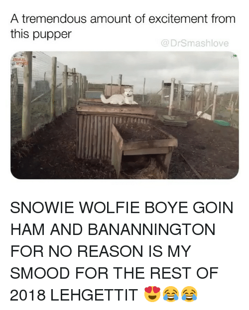 Memes, Reason, and 🤖: A tremendous amount of excitement fromm  this pupper  @DrSmashlove SNOWIE WOLFIE BOYE GOIN HAM AND BANANNINGTON FOR NO REASON IS MY SMOOD FOR THE REST OF 2018 LEHGETTIT 😍😂😂