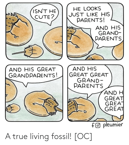 Living: A true living fossil! [OC]