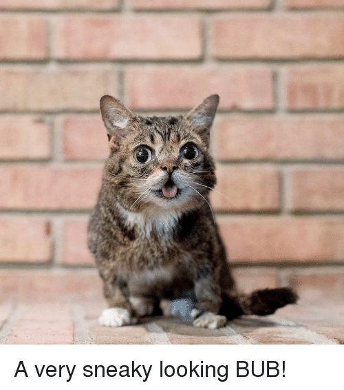Memes, 🤖, and Looking: A very sneaky looking BUB!