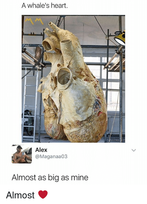 Bigly: A whale's heart.  Alex  @Maganaa03  Almost as big as mine Almost ❤️