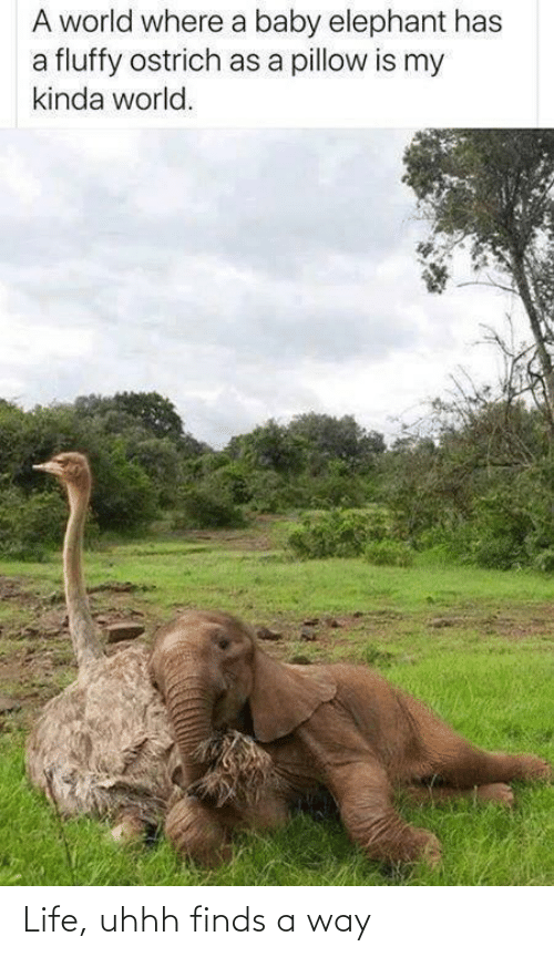 Elephant: A world where a baby elephant has  a fluffy ostrich as a pillow is my  kinda world. Life, uhhh finds a way