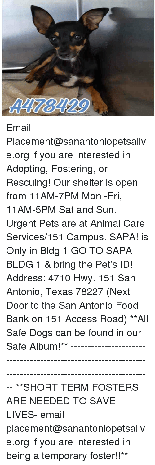 Dogs, Food, and Memes: A178129 Email Placement@sanantoniopetsalive.org if you are interested in Adopting, Fostering, or Rescuing!  Our shelter is open from 11AM-7PM Mon -Fri, 11AM-5PM Sat and Sun.  Urgent Pets are at Animal Care Services/151 Campus. SAPA! is Only in Bldg 1 GO TO SAPA BLDG 1 & bring the Pet's ID! Address: 4710 Hwy. 151 San Antonio, Texas 78227 (Next Door to the San Antonio Food Bank on 151 Access Road)  **All Safe Dogs can be found in our Safe Album!** ---------------------------------------------------------------------------------------------------------- **SHORT TERM FOSTERS ARE NEEDED TO SAVE LIVES- email placement@sanantoniopetsalive.org if you are interested in being a temporary foster!!**