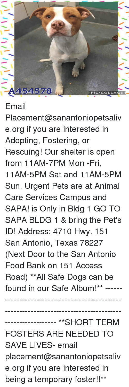Dogs, Food, and Memes: A454578  PIC COLLAGE Email Placement@sanantoniopetsalive.org if you are interested in Adopting, Fostering, or Rescuing!  Our shelter is open from 11AM-7PM Mon -Fri, 11AM-5PM Sat and 11AM-5PM Sun.  Urgent Pets are at Animal Care Services Campus and SAPA! is Only in Bldg 1 GO TO SAPA BLDG 1 & bring the Pet's ID! Address: 4710 Hwy. 151 San Antonio, Texas 78227 (Next Door to the San Antonio Food Bank on 151 Access Road)  **All Safe Dogs can be found in our Safe Album!** ---------------------------------------------------------------------------------------------------------- **SHORT TERM FOSTERS ARE NEEDED TO SAVE LIVES- email placement@sanantoniopetsalive.org if you are interested in being a temporary foster!!**