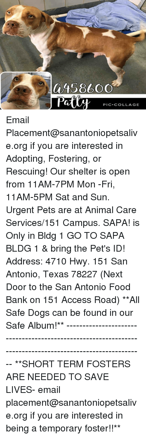 Dogs, Food, and Memes: a4586OO  PIC.COLLAGE Email Placement@sanantoniopetsalive.org if you are interested in Adopting, Fostering, or Rescuing!  Our shelter is open from 11AM-7PM Mon -Fri, 11AM-5PM Sat and Sun.  Urgent Pets are at Animal Care Services/151 Campus. SAPA! is Only in Bldg 1 GO TO SAPA BLDG 1 & bring the Pet's ID! Address: 4710 Hwy. 151 San Antonio, Texas 78227 (Next Door to the San Antonio Food Bank on 151 Access Road)  **All Safe Dogs can be found in our Safe Album!** ---------------------------------------------------------------------------------------------------------- **SHORT TERM FOSTERS ARE NEEDED TO SAVE LIVES- email placement@sanantoniopetsalive.org if you are interested in being a temporary foster!!**