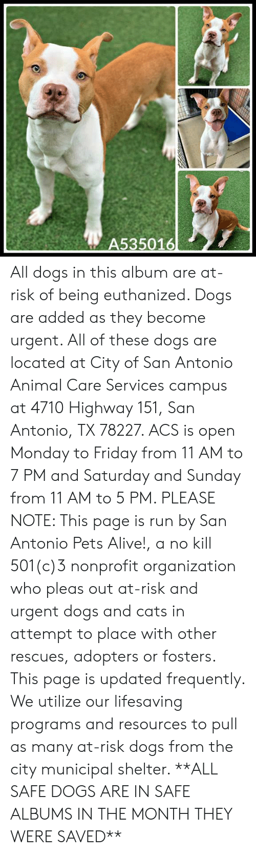 Alive, Cats, and Dogs: A535016 All dogs in this album are at-risk of being euthanized.  Dogs are added as they become urgent.  All of these dogs are located at City of San Antonio Animal Care Services campus at 4710 Highway 151, San Antonio, TX 78227. ACS is open Monday to Friday from 11 AM to 7 PM and Saturday and Sunday from 11 AM to 5 PM.   PLEASE NOTE: This page is run by San Antonio Pets Alive!, a no kill 501(c)3 nonprofit organization who pleas out at-risk and urgent dogs and cats in attempt to place with other rescues, adopters or fosters.   This page is updated frequently.  We utilize our lifesaving programs and resources to pull as many at-risk dogs from the city municipal shelter. **ALL SAFE DOGS ARE IN SAFE ALBUMS IN THE MONTH THEY WERE SAVED**
