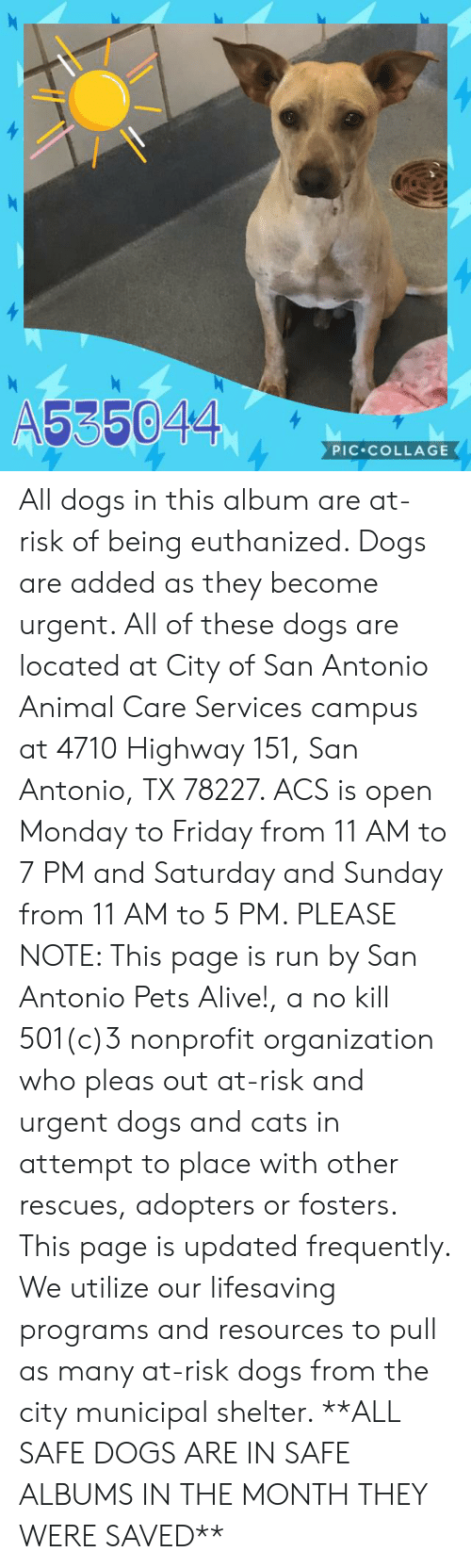 Alive, Cats, and Dogs: A535044  PIC COLLAGE All dogs in this album are at-risk of being euthanized.  Dogs are added as they become urgent.  All of these dogs are located at City of San Antonio Animal Care Services campus at 4710 Highway 151, San Antonio, TX 78227. ACS is open Monday to Friday from 11 AM to 7 PM and Saturday and Sunday from 11 AM to 5 PM.   PLEASE NOTE: This page is run by San Antonio Pets Alive!, a no kill 501(c)3 nonprofit organization who pleas out at-risk and urgent dogs and cats in attempt to place with other rescues, adopters or fosters.   This page is updated frequently.  We utilize our lifesaving programs and resources to pull as many at-risk dogs from the city municipal shelter. **ALL SAFE DOGS ARE IN SAFE ALBUMS IN THE MONTH THEY WERE SAVED**