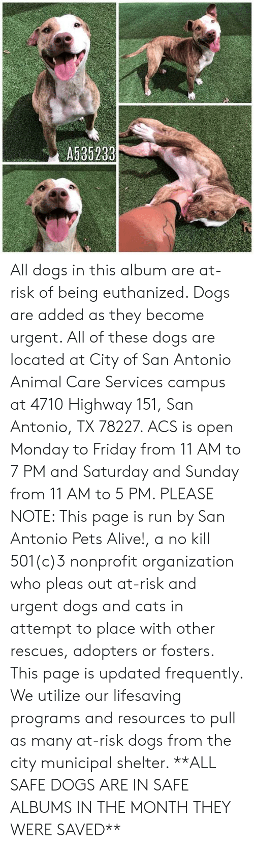 Alive, Cats, and Dogs: A535233 All dogs in this album are at-risk of being euthanized.  Dogs are added as they become urgent.  All of these dogs are located at City of San Antonio Animal Care Services campus at 4710 Highway 151, San Antonio, TX 78227. ACS is open Monday to Friday from 11 AM to 7 PM and Saturday and Sunday from 11 AM to 5 PM.   PLEASE NOTE: This page is run by San Antonio Pets Alive!, a no kill 501(c)3 nonprofit organization who pleas out at-risk and urgent dogs and cats in attempt to place with other rescues, adopters or fosters.   This page is updated frequently.  We utilize our lifesaving programs and resources to pull as many at-risk dogs from the city municipal shelter. **ALL SAFE DOGS ARE IN SAFE ALBUMS IN THE MONTH THEY WERE SAVED**
